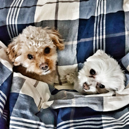 freetoedit dogs doglover picoftheday shareit pcloungeday
