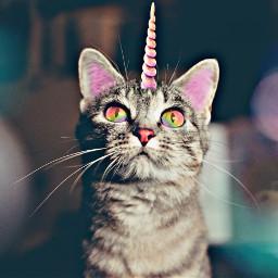 freetoedit unicorn cat irchappymeowyear happymeowyear