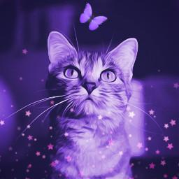 happymeowyear purple petsandanimals catlover madewithpicsart