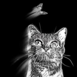 freetoedit shadesofgraymagiceffect madewithpicsart blackandwhite catsofpicsart irchappymeowyear