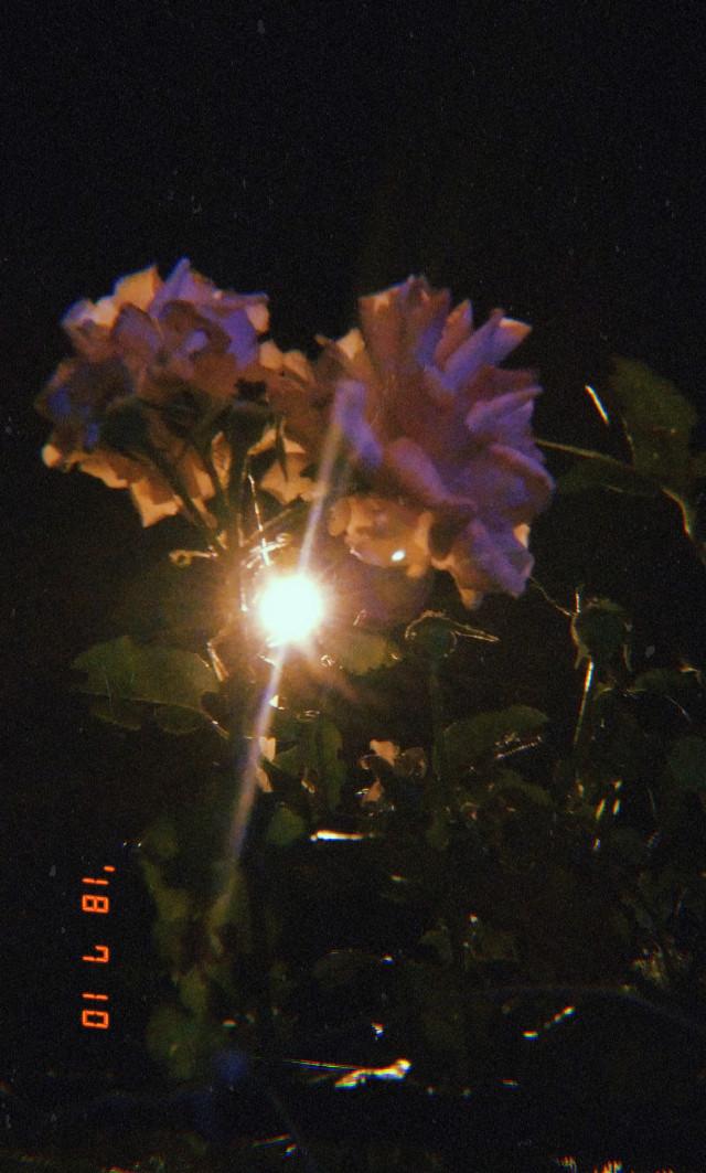 #rose #roses #güller  #freetoedit  #gül #huji #hujicam #photography #photo #photographer #night #light #dark
