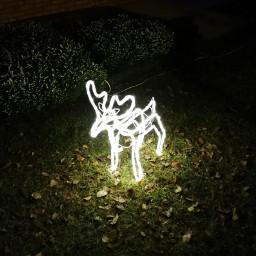 freetoedit reindeer light shining christmas pclightinthedark