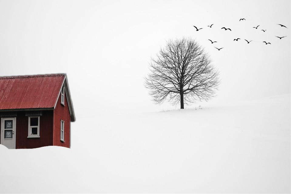 Dead winter.... #minimalism #minimal #nochallenge #freetoedit #birds