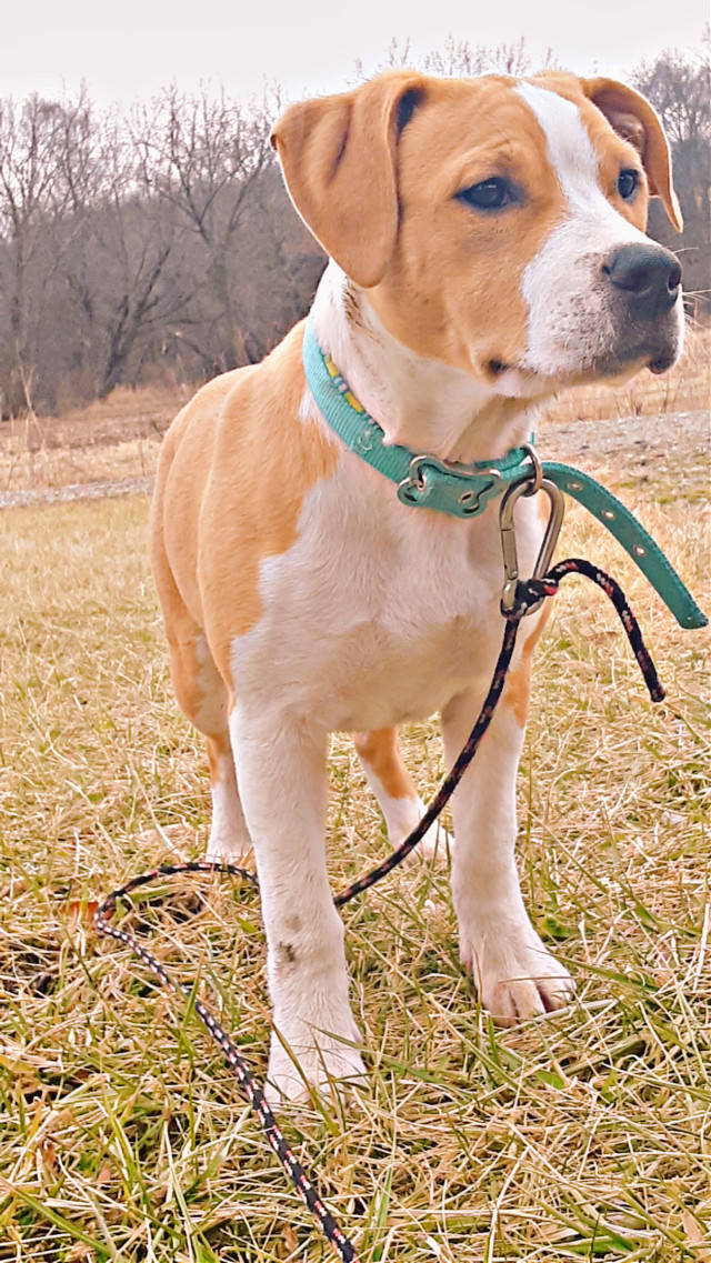 #freetoedit #patchouli #dog #myphotography #sundayfunday #dogsofpicsart