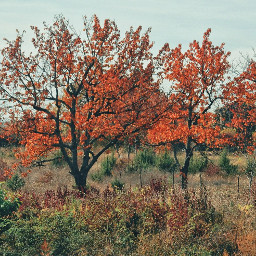 myphotography trees nature fall autumn freetoedit