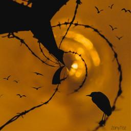 vipshoutout bird golden sunset tinyplaneteffect freetoedit tinyplanet