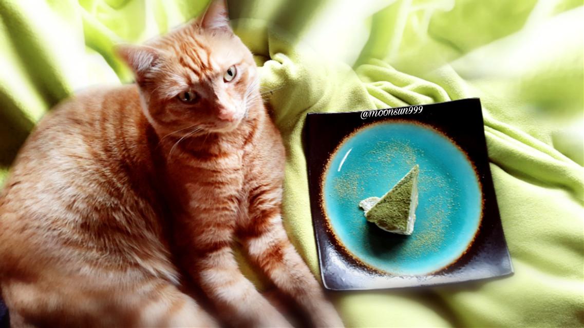 Sunny wants to eat cake😃 #freetoedit #photography #petsandanimals #mycat #cat #orange