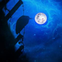 freetoedit vipshoutout adjusttool hueeffect moon bird blue