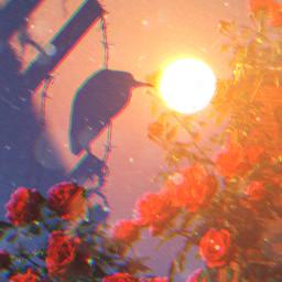 freetoedit vipshoutout glitcheffect doubleexposure flower