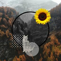freetoedit autumncollage sunflower newspapercat treespirit