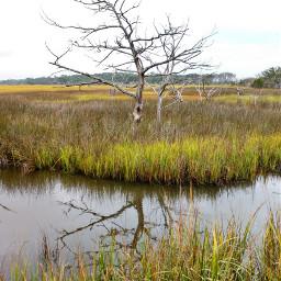 freetoedit marsh outdoors nature creek pcintonature