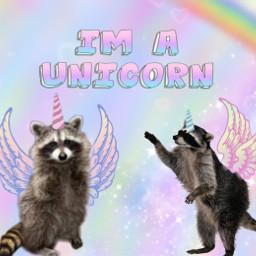 freetoedit raccoon unicorn believeinyourself mood