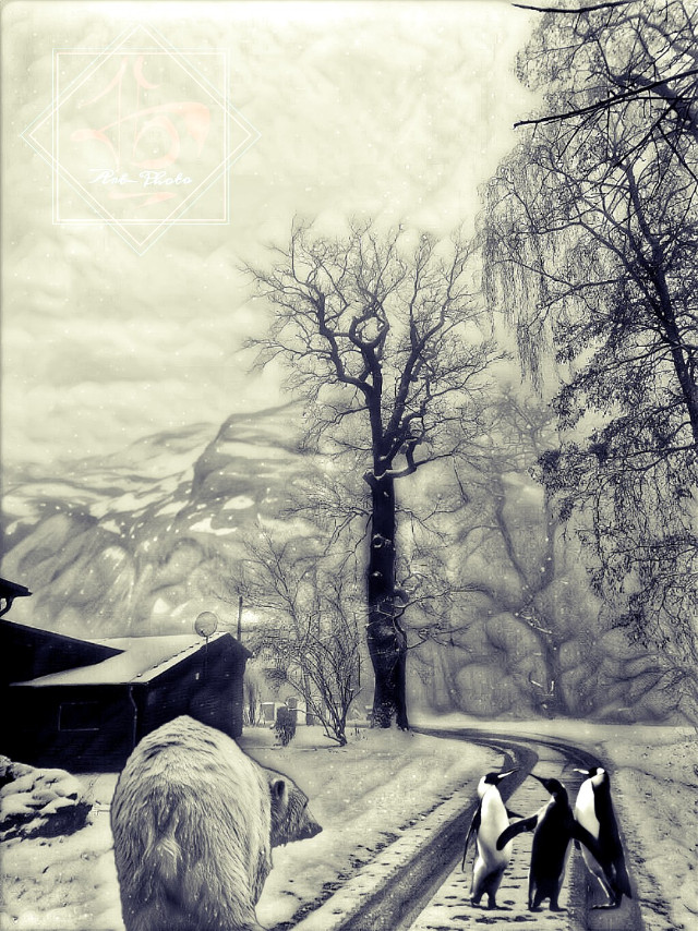 #freetoedit #winter #trees #snow #bear #pinguin #photoedit #street #oldhouse #tbgraphics #mountains #cold #beautiful #clouds #dusk #Icebear #polarbear #pinguins #entertainment #picsart #animals #blackandwhite #creative #fantasy