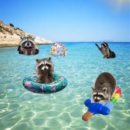 freetoedit raccoon poolparty fun