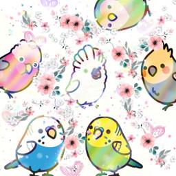 freetoedit bird cute