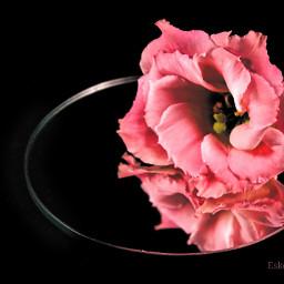 flowerphotography flower flowers photography