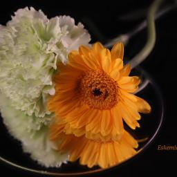 flowerphotography flower flowers flowerstalking flowerlove