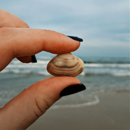 freetoedit hand shell seashell sea