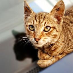 cats catsphotography catportrait animallovers catsofpicsart