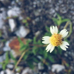 flower nature life peace love