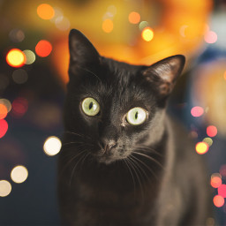 freetoedit cats catlove cateyes catsofpicsart
