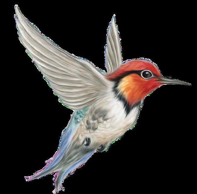 #птицы#