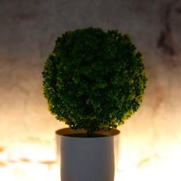 plant mobilephotography nightshot