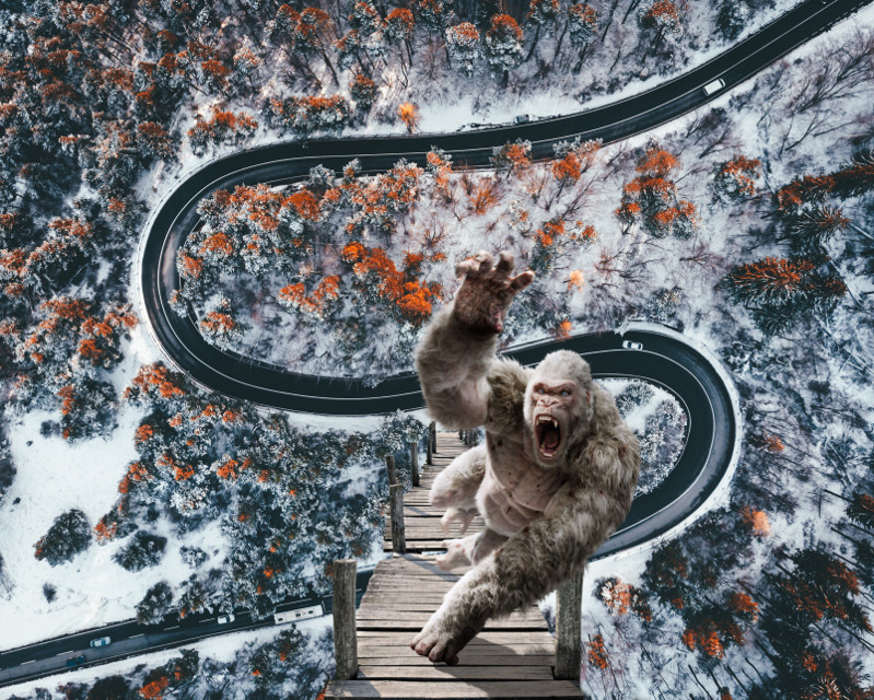 #freetoedit #dock #wood #forrest #road #shadow #surreal #ape #monkey #scary #photography #aerial