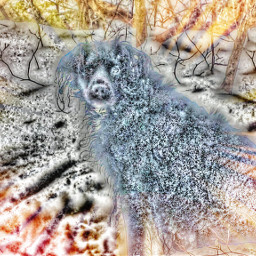 freetoedit doglove snow woods heavensent