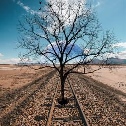 freetoedit tree railroadtracks lonelytree