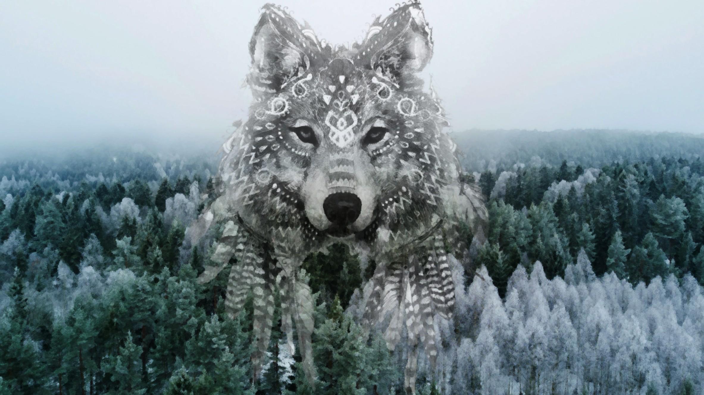 составил таинственная фото волка этом нас