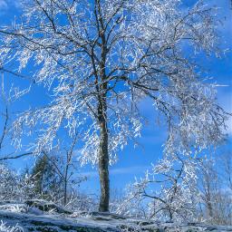 freetoedit nature wintertime trees beautifulday