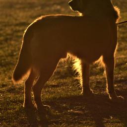 freetoedit photography petsandanimals dogs pcpetsofpa