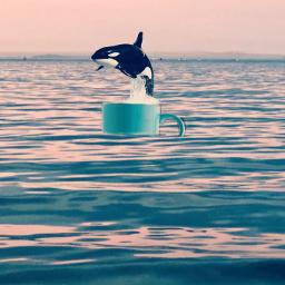 freetoedit whale sea cup ircmugfullofpossibilities