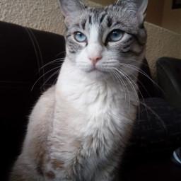 nala nalitos pet cat mycat pcpetsofpa