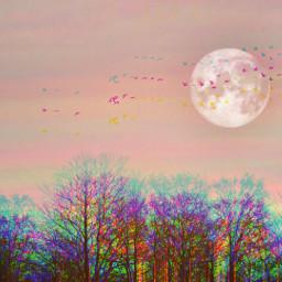freetoedit trees flyingbirds moon sunnyeffect