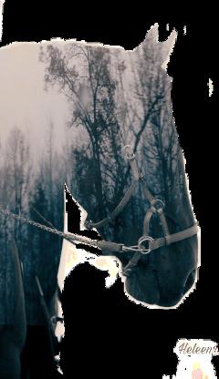 mysticker freetoedit