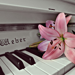 pcmusicalinstruments musicalinstruments piano
