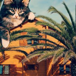 freetoedit cat roof edit