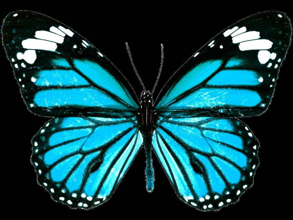 Papillon Butterfly Butterfly Blue Bleu
