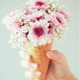 freetoedit pinkrose