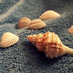 freetoedit shell seashell macro macrophotography