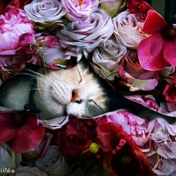 freetoedit remix cat flowers fantasy