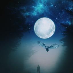 freetoedit woods moon fullmoon owl