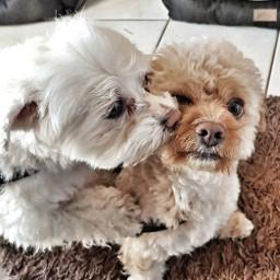 freetoedit love dogs sweet shareit pcloveyou