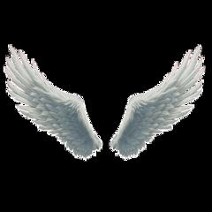 big beautiful white fluffy wings