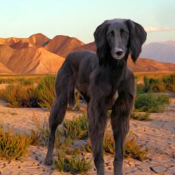 taigan kirghizistan sighthound dog