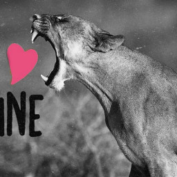 freetoedit bemine valentinesday love kittycat