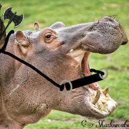 freetoedit cat hippo warhorsehippo warriorcat