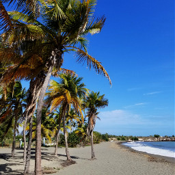 freetoedit pcpalmtrees pcbeachtime beach nature